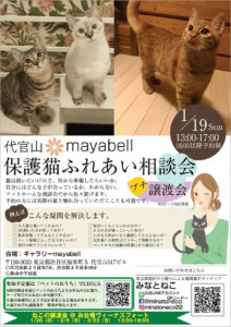 保護猫ふれあい相談会・プチ譲渡会